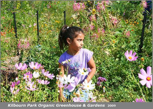 ©2009 Rich Unger Community Garden