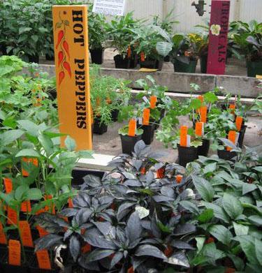 Plantsalecrop